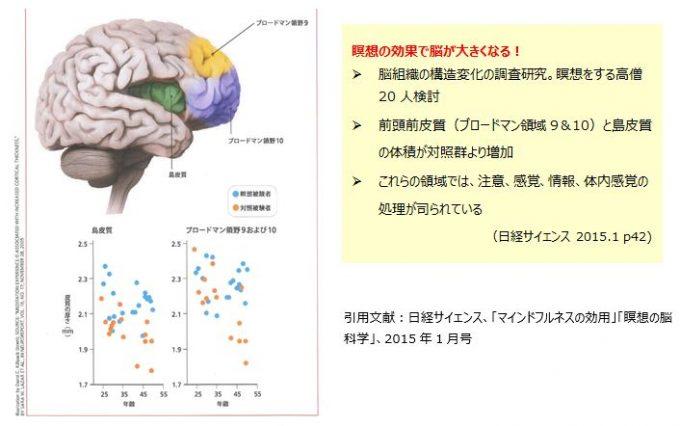 瞑想の効果で脳が大きくなる